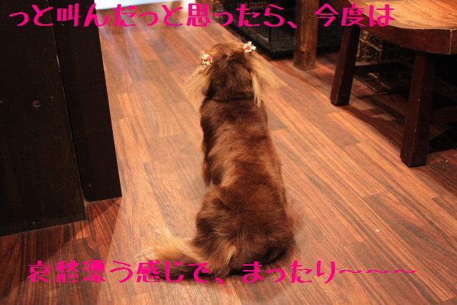 b0130018_18265135.jpg