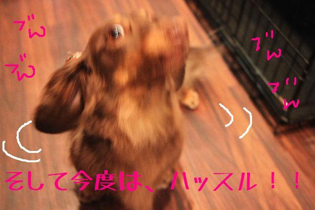 b0130018_18265946.jpg