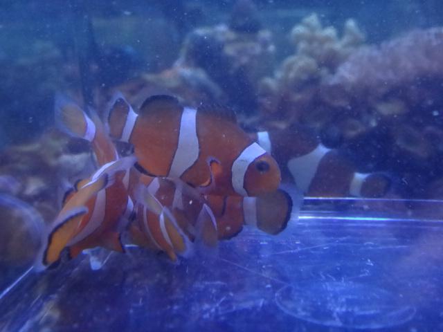 海水魚・サンゴ・水草・淡水魚_f0189122_11294756.jpg
