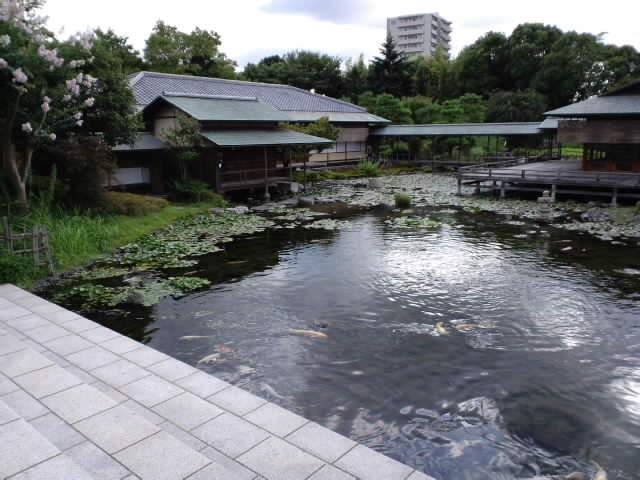 白鳥庭園でお茶会展示やります_e0209927_12101262.jpg