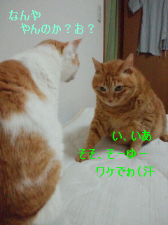 f0192630_185862.jpg