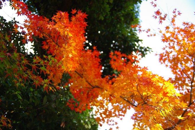 再び京都へ 宇治 平等院_e0171336_1282043.jpg