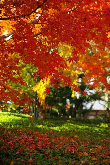 再び京都へ 宇治 平等院_e0171336_1292061.jpg