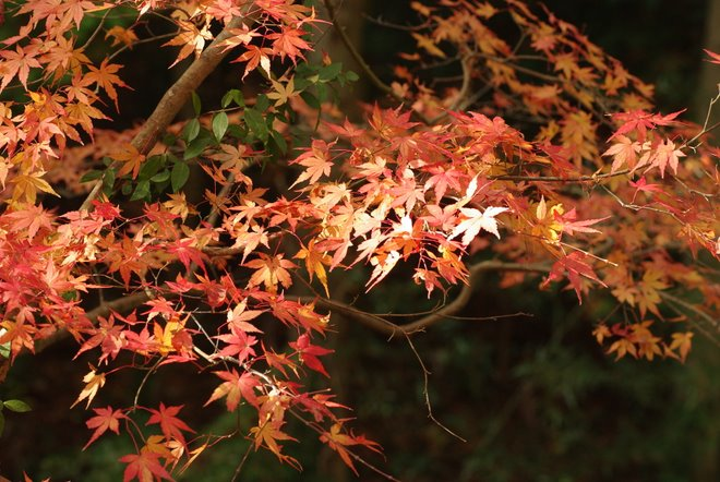 晩秋の紅葉  香嵐渓_e0171336_22292676.jpg