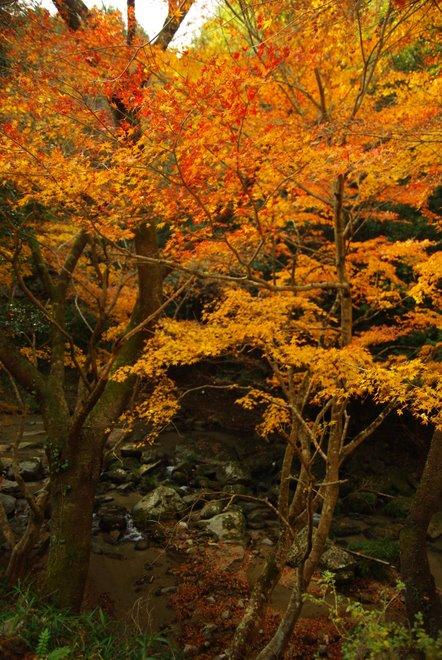 晩秋の紅葉  香嵐渓_e0171336_22301643.jpg