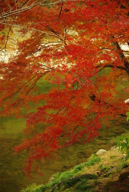晩秋の紅葉  香嵐渓_e0171336_22304373.jpg
