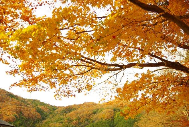 晩秋の紅葉  香嵐渓_e0171336_22322658.jpg