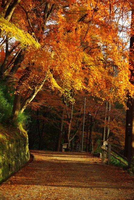 晩秋の紅葉  香嵐渓_e0171336_2241658.jpg