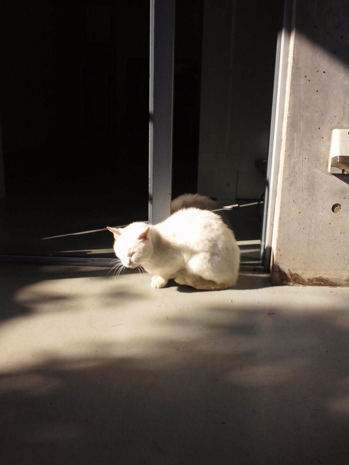 ノラ猫のシロ_a0068339_13531685.jpg