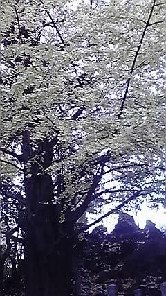 郡司庸久さん、慶子さん個展_b0132442_23463687.jpg