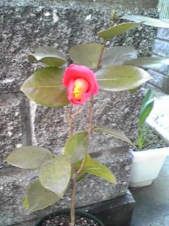 初めてお便りします上五島のクララです(^-^)/ _b0191255_18393960.jpg