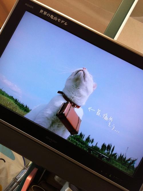 ニャラン 松山風車旅_c0185356_1516349.jpg
