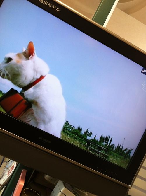 ニャラン 松山風車旅_c0185356_15543660.jpg