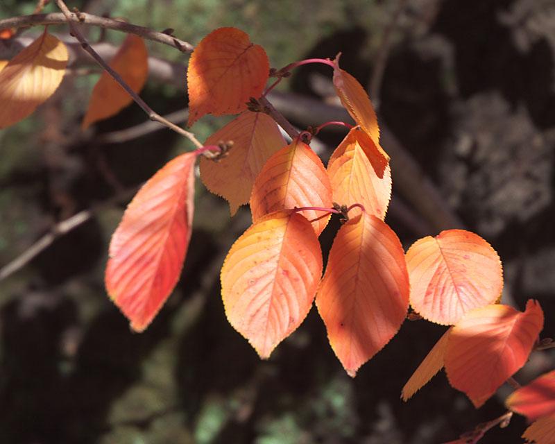 桜の美しい季節_c0081286_8103717.jpg