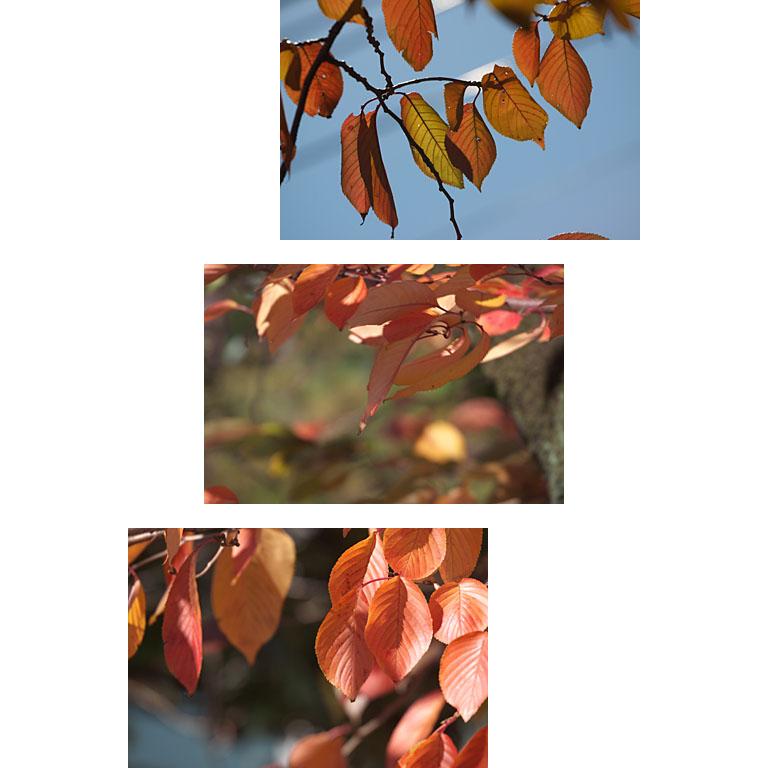 桜の美しい季節_c0081286_8151426.jpg