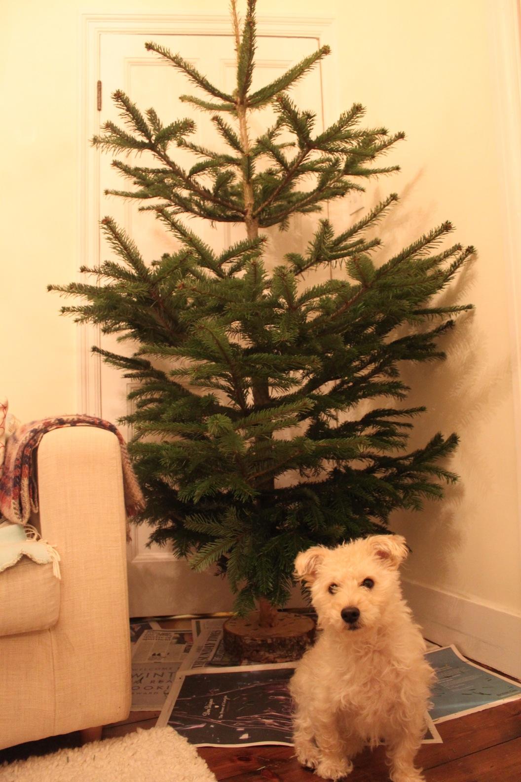 クリスマスツリー 2011_a0137487_0271233.jpg
