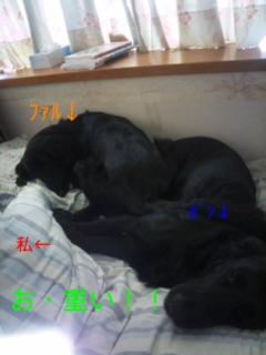 f0020595_9545411.jpg