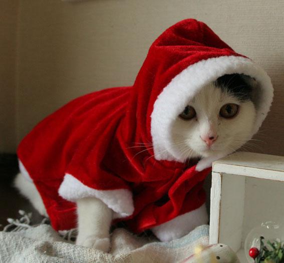 サンタさんがやって来た♪_d0071596_1912799.jpg