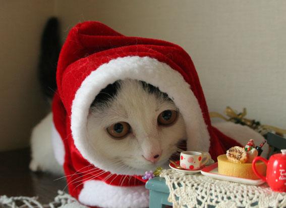 サンタさんがやって来た♪_d0071596_19132555.jpg