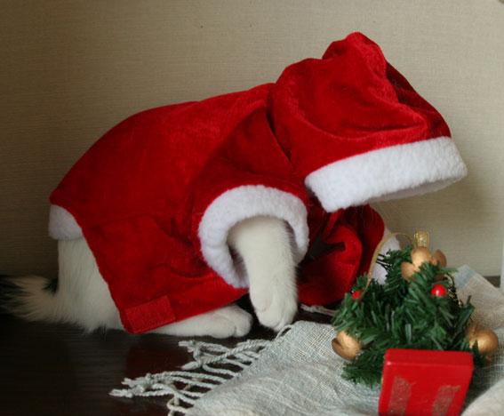 サンタさんがやって来た♪_d0071596_19153168.jpg
