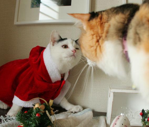 サンタさんがやって来た♪_d0071596_19234735.jpg