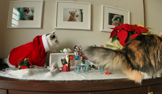 サンタさんがやって来た♪_d0071596_1931337.jpg