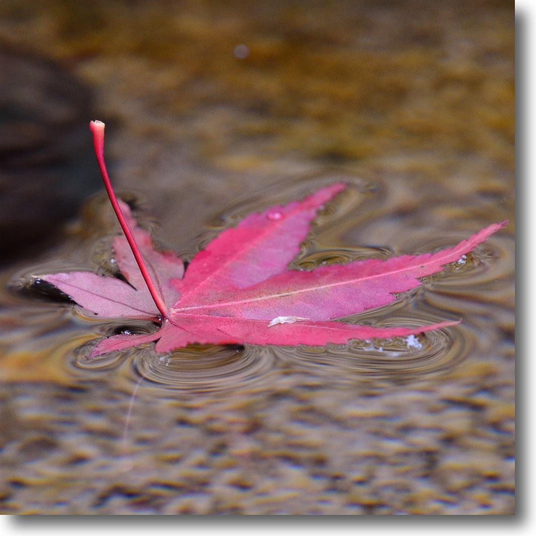 晩秋の雨_f0099102_1983715.jpg