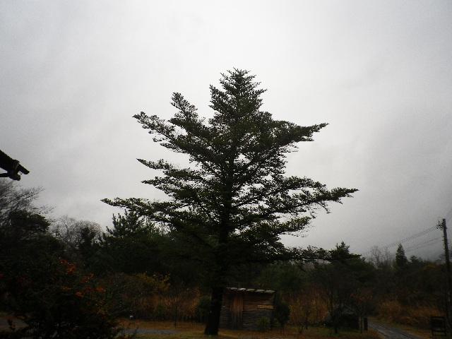 雨です_e0179508_1037810.jpg