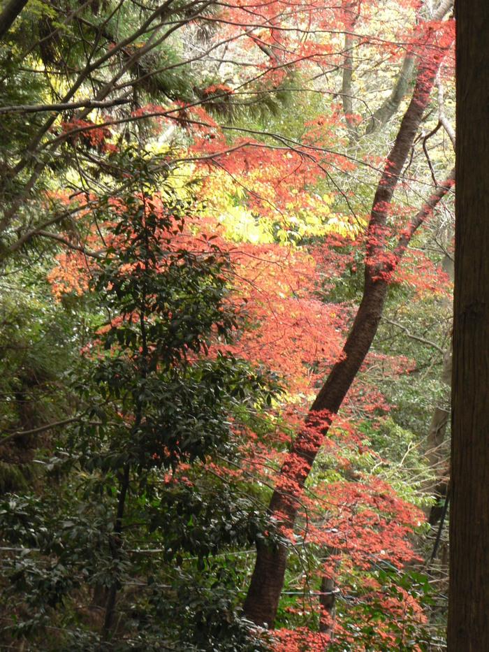 阿武山(586m)_f0219710_10512838.jpg