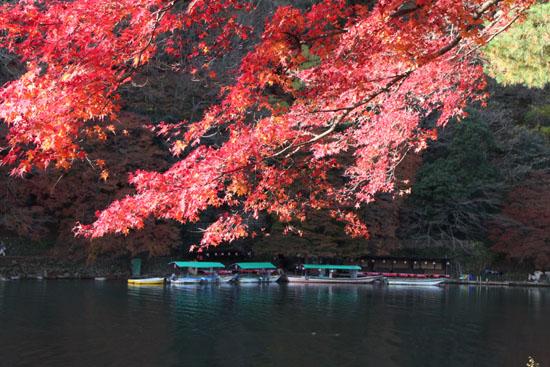 嵐山亀山公園 紅葉終盤_e0048413_195127100.jpg