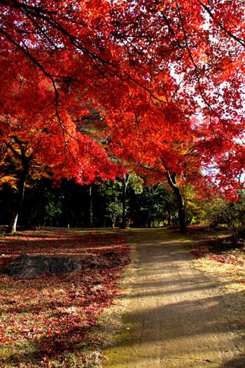 嵐山亀山公園 紅葉終盤_e0048413_19521214.jpg