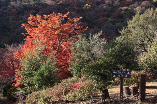 嵐山亀山公園 紅葉終盤_e0048413_19522610.jpg