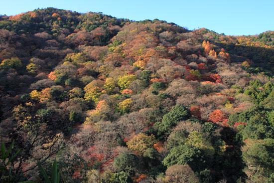 嵐山亀山公園 紅葉終盤_e0048413_19523948.jpg