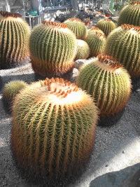 植物公園_e0176128_11394086.jpg