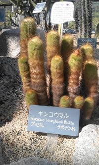 植物公園_e0176128_1140222.jpg