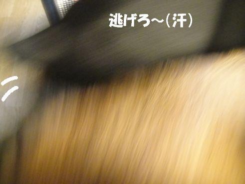 f0088731_12311086.jpg