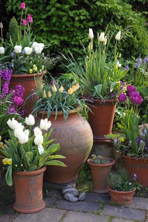 春のディスプレイ_d0229351_2045043.jpg