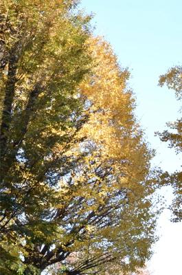 紅葉が奇麗です_a0133859_9513448.jpg