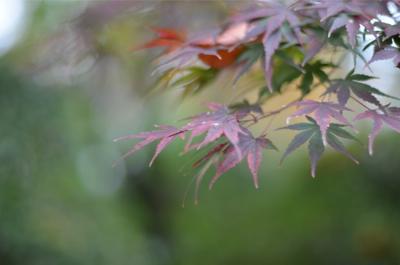 紅葉が奇麗です_a0133859_9523285.jpg