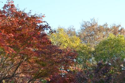 紅葉が奇麗です_a0133859_952780.jpg