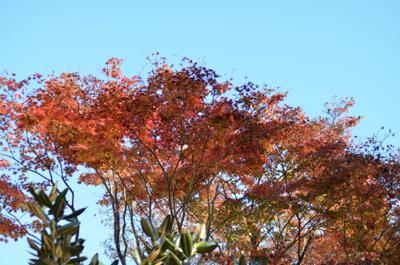紅葉が奇麗です_a0133859_9534891.jpg