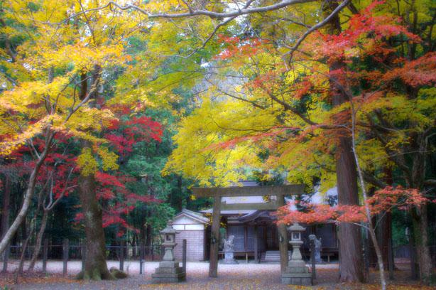 八柱神社紅葉_b0186680_11173345.jpg