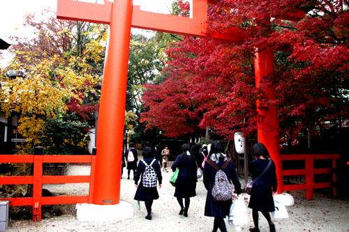 下鴨神社 紅葉の終盤_e0048413_1615375.jpg
