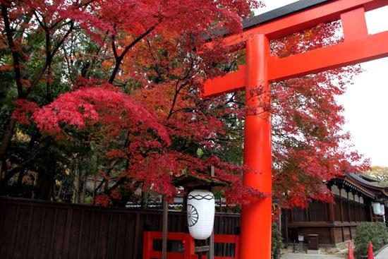 下鴨神社 紅葉の終盤_e0048413_1615954.jpg