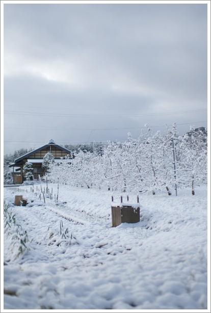 雪_c0157248_12124289.jpg