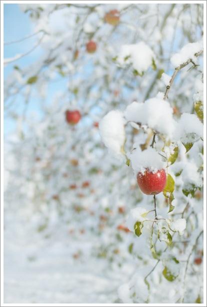 雪_c0157248_12125384.jpg
