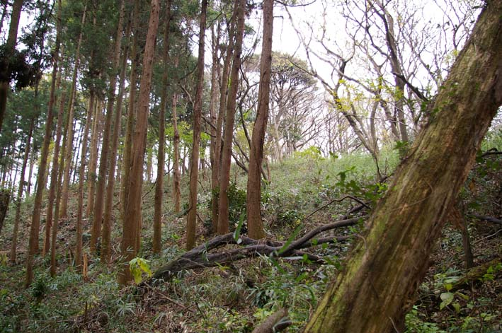 六国見山森林公園の夫婦桜近くを臨時手入れ(12・8)_c0014967_9173320.jpg