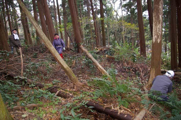 六国見山森林公園の夫婦桜近くを臨時手入れ(12・8)_c0014967_9203486.jpg