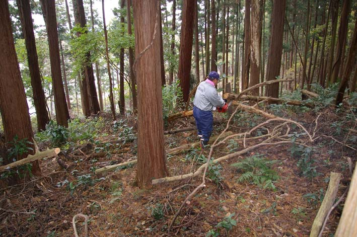六国見山森林公園の夫婦桜近くを臨時手入れ(12・8)_c0014967_920963.jpg