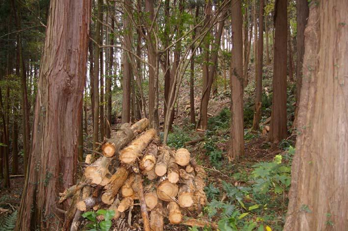 六国見山森林公園の夫婦桜近くを臨時手入れ(12・8)_c0014967_9235090.jpg
